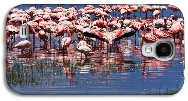African Heritage Galaxy S4 Cases - Lesser Flamingo  Galaxy S4 Case by Aidan Moran