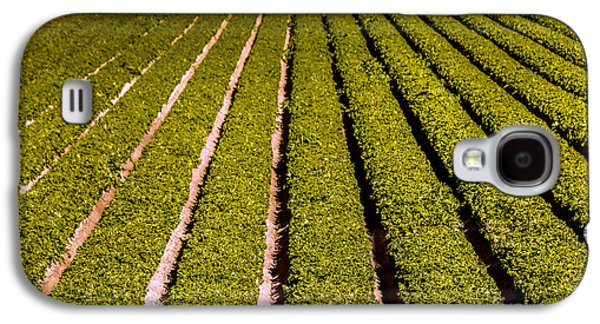 Romaine Galaxy S4 Cases - Lettuce Farming Galaxy S4 Case by Robert Bales