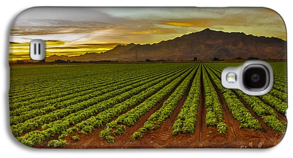 Romaine Galaxy S4 Cases - Lettuce Sunrise Galaxy S4 Case by Robert Bales