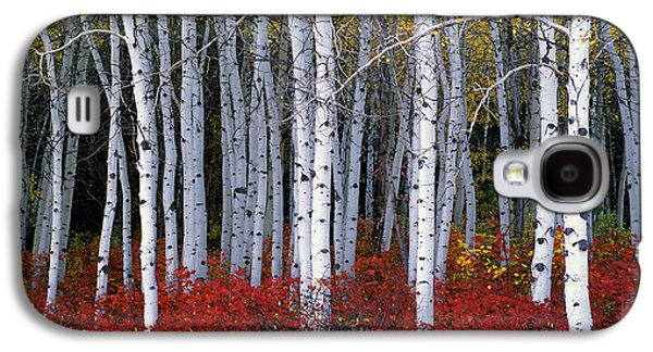 Trees Photographs Galaxy S4 Cases - Light in Forest Galaxy S4 Case by Leland D Howard