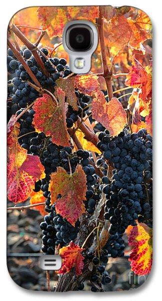 Vintner Galaxy S4 Cases - Light through Fall Vineyard Galaxy S4 Case by Carol Groenen
