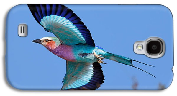 Flying Animal Galaxy S4 Cases - Lilac-breasted Roller in flight Galaxy S4 Case by Johan Swanepoel