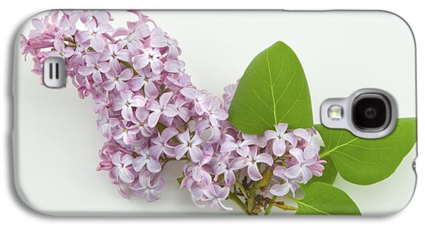 Lilacs Galaxy S4 Cases - Lilac Flowers - White Background Galaxy S4 Case by Keith Webber Jr