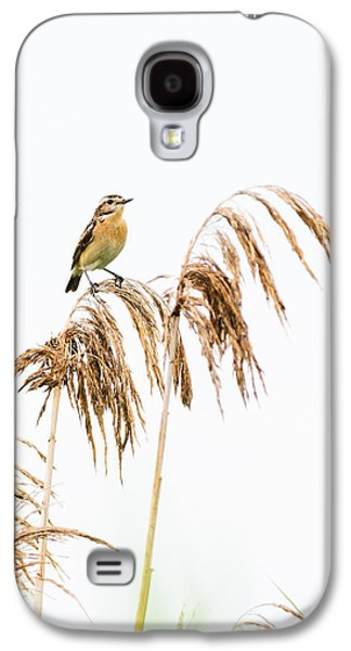 Cheer On Galaxy S4 Cases - Little bird clinging to a reed stem Galaxy S4 Case by Attila Simon