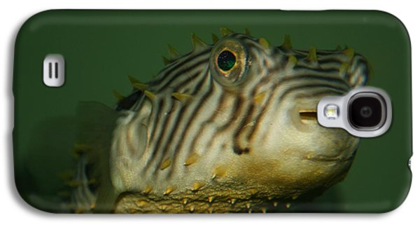 Porcupine Fish Galaxy S4 Cases - Little Porcupine Fish Galaxy S4 Case by Beth Andersen