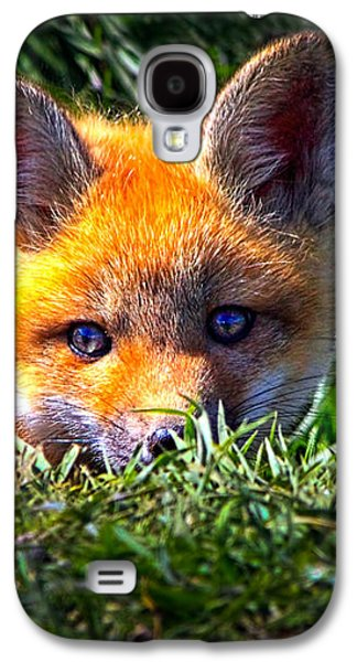 Red Fox Galaxy S4 Cases - Little Red Fox Galaxy S4 Case by Bob Orsillo