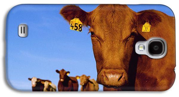 Livestock - Closeup Of A Red Angus Cow Galaxy S4 Case by Sam Wirzba