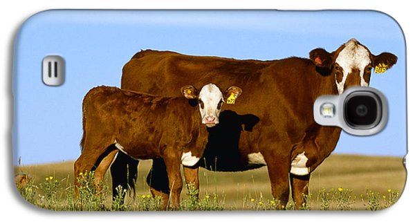 Livestock - Crossbred Cow And Calf Galaxy S4 Case by Sam Wirzba