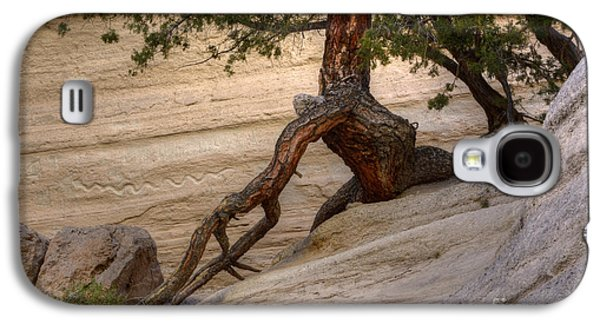 Tree Roots Photographs Galaxy S4 Cases - Living Gracefully Galaxy S4 Case by Bob Christopher