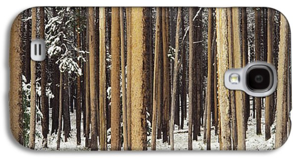 Pine Barrens Galaxy S4 Cases - Lodgepole Pines And Snow Grand Teton Galaxy S4 Case by Panoramic Images