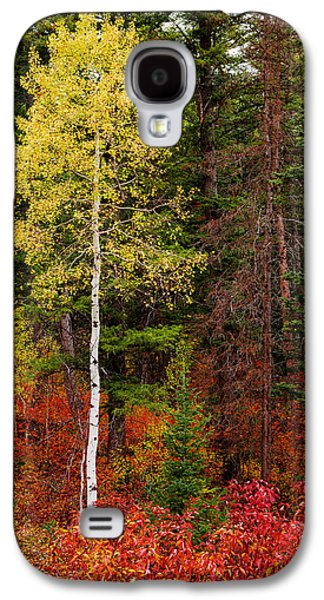 Aspen Galaxy S4 Cases - Lone Aspen in Fall Galaxy S4 Case by Chad Dutson