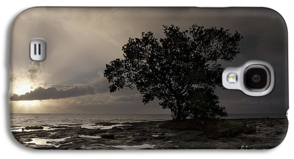 Tranquil Photographs Galaxy S4 Cases - Lone Mangrove Galaxy S4 Case by Keith Kapple