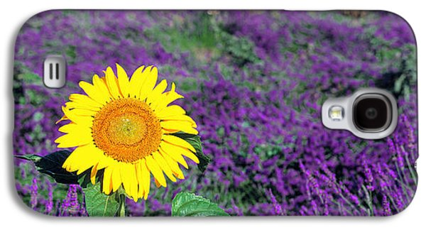 Sunflower Fields Galaxy S4 Cases - Lone Sunflower In Lavender Field France Galaxy S4 Case by Panoramic Images