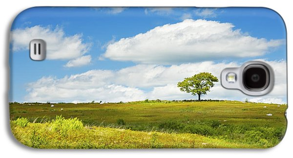 Maine Meadow Galaxy S4 Cases - Lone Tree With Blue Sky In Blueberry Field Maine Photograph  Galaxy S4 Case by Keith Webber Jr