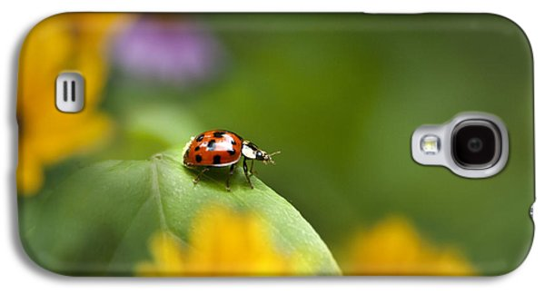 Lonely Ladybug Galaxy S4 Case by Christina Rollo