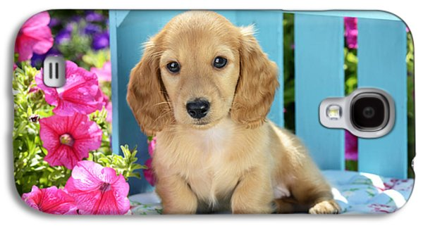 Puppies Galaxy S4 Cases - Long Eared Puppy In Front Of Blue Box Galaxy S4 Case by Greg Cuddiford