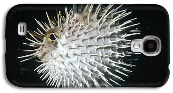 Porcupine Fish Galaxy S4 Cases - Long-spine Porcupinefish North America Galaxy S4 Case by Flip Nicklin
