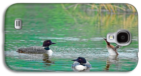 Loon Galaxy S4 Cases - Loon Family Galaxy S4 Case by Donna Caplinger