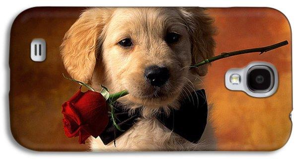 Dogs Reliefs Galaxy S4 Cases - Love Galaxy S4 Case by Raphael  Sanzio