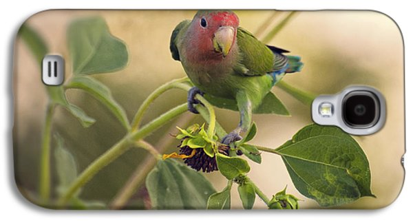 Lovebird On  Sunflower Branch  Galaxy S4 Case by Saija  Lehtonen