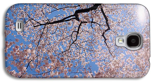 Cherry Blossoms Galaxy S4 Cases - Low Angle View Of Cherry Blossom Trees Galaxy S4 Case by Panoramic Images