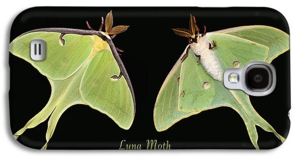 Luna Galaxy S4 Cases - Luna Moth Galaxy S4 Case by Kristin Elmquist