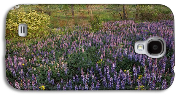 Indiana Landscapes Photographs Galaxy S4 Cases - Lupine Indiana Dunes National Lakeshore Galaxy S4 Case by Tim Fitzharris