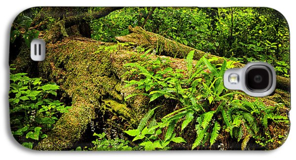 Environmental Galaxy S4 Cases - Lush temperate rainforest Galaxy S4 Case by Elena Elisseeva