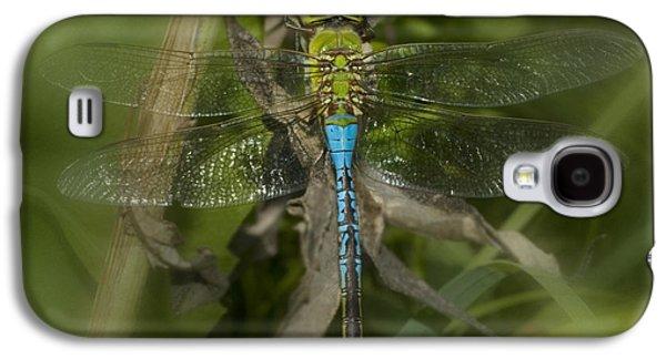 Ants Galaxy S4 Cases - Macro Dragonfly Galaxy S4 Case by Jack Zulli