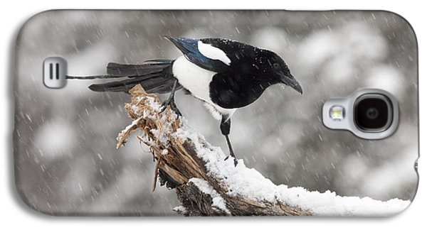 Magpie Out On A Branch Galaxy S4 Case by Tim Grams