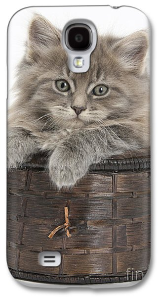 Old Maine Houses Galaxy S4 Cases - Maine Coon Kitten, Basket Galaxy S4 Case by Mark Taylor