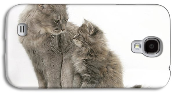 Old Maine Houses Galaxy S4 Cases - Maine Coon Mother Cat And Kitten Galaxy S4 Case by Mark Taylor