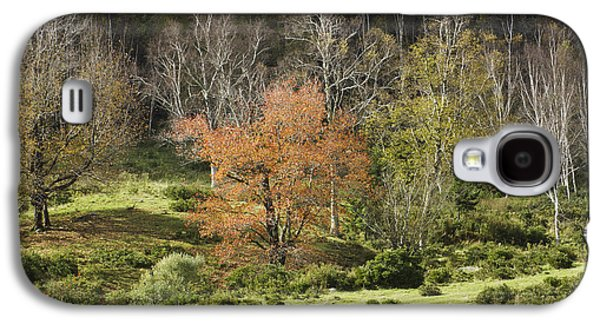Maine Meadow Galaxy S4 Cases - Maine Hillside Landscape in Fall Galaxy S4 Case by Keith Webber Jr