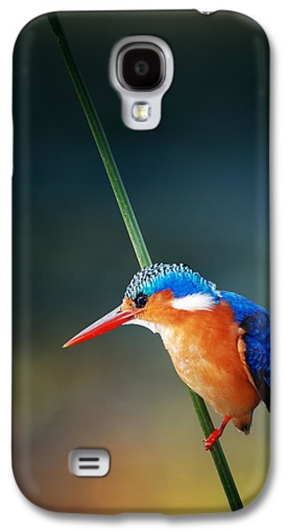 Small Galaxy S4 Cases - Malachite Kingfisher Galaxy S4 Case by Johan Swanepoel