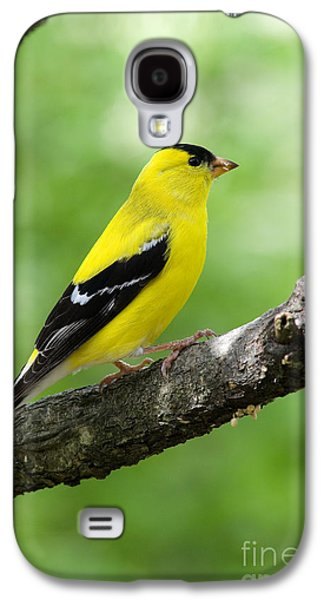 Landmarks Photographs Galaxy S4 Cases - Male American Goldfinch Galaxy S4 Case by Thomas R Fletcher