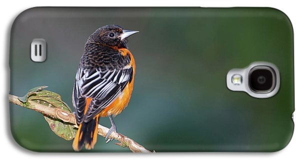 Male Baltimore Oriole, Icterus Galbula Galaxy S4 Case by Thomas Wiewandt