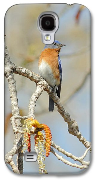 Business Decor Galaxy S4 Cases - Male Bluebird In Budding Tree Galaxy S4 Case by Robert Frederick