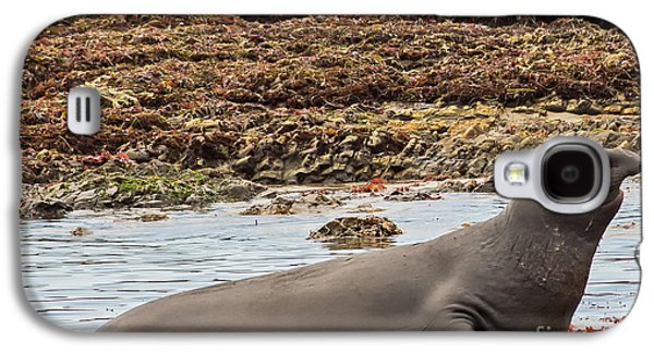 Ano Nuevo Galaxy S4 Cases - Male Elephant Seal in Ano Nuevo California State Park Galaxy S4 Case by Natural Focal Point Photography