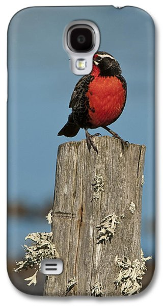 Male Long-tailed Meadowlark On Fencepost Galaxy S4 Case by John Shaw