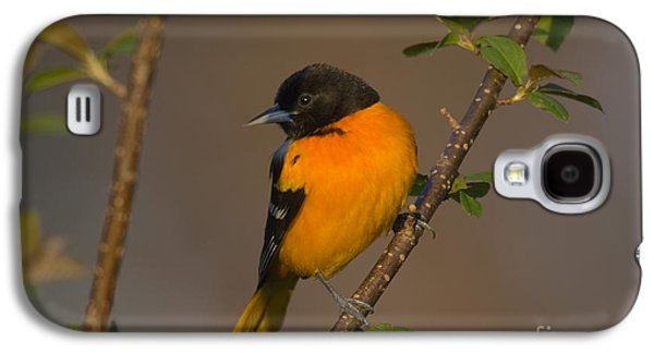 Male Northern Oriole Galaxy S4 Case by Thomas and Pat Leeson
