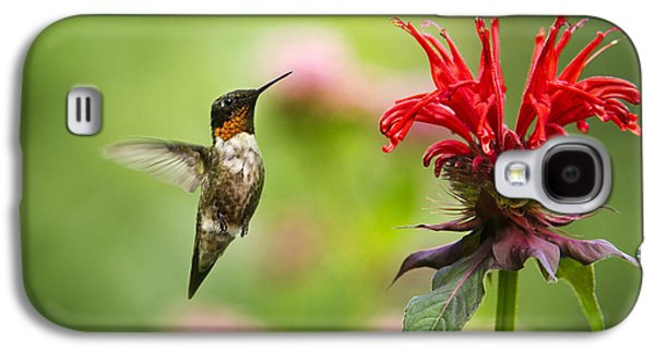 Hovering Galaxy S4 Cases - Male Ruby-Throated Hummingbird Hovering Near Flowers Galaxy S4 Case by Christina Rollo