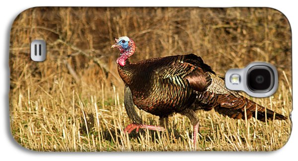 Male Tom Turkey In Breeding Plumage Galaxy S4 Case by Chuck Haney