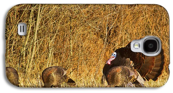 Male Tom Turkey With Hens Galaxy S4 Case by Chuck Haney