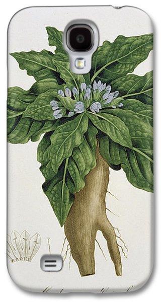 Flora Drawings Galaxy S4 Cases - Mandragora Officinarum Galaxy S4 Case by LFJ Hoquart