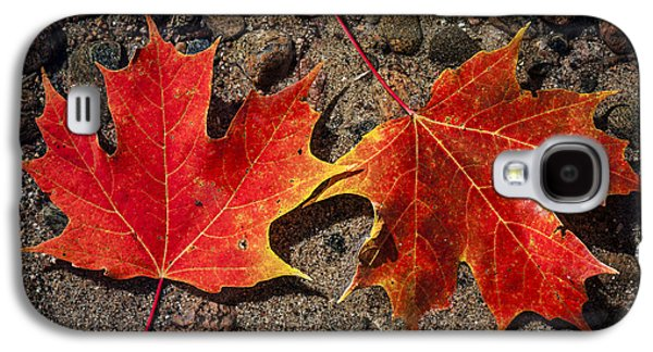 Autumn Foliage Photographs Galaxy S4 Cases - Maple leaves in water Galaxy S4 Case by Elena Elisseeva