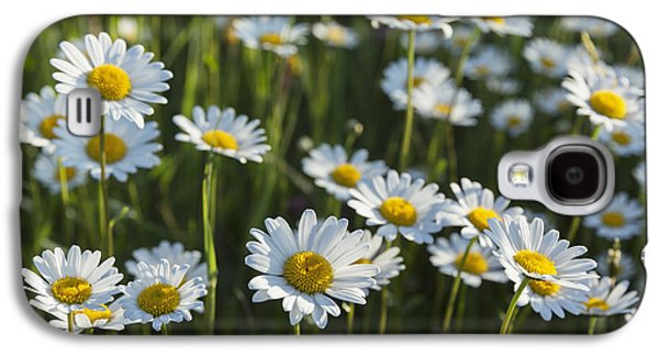 Sunlight On Flowers Galaxy S4 Cases - Marguerite _leucanthemum__ Black Galaxy S4 Case by Carl Bruemmer
