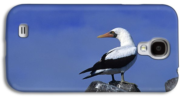 Masked Booby Bird Galaxy S4 Case by Thomas Wiewandt