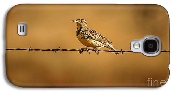 Meadowlark And Barbed Wire Galaxy S4 Case by Robert Frederick