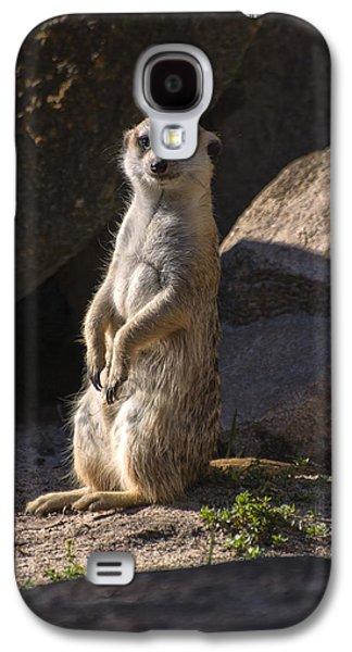 Meerkat Looking Forward Galaxy S4 Case by Chris Flees