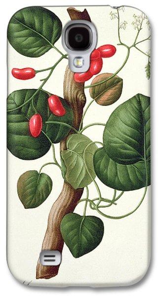 Flora Drawings Galaxy S4 Cases - Menispermum Galaxy S4 Case by LFJ Hoquart